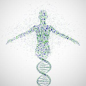female DNA